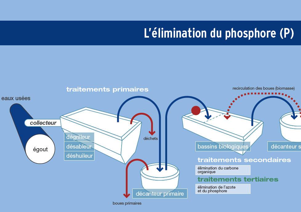 L'élimination du phosphore